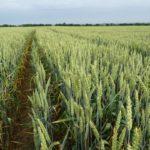 Géopolitique et sécurité alimentaire : quels sont les enjeux pour la France ?