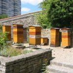 Biodiversité : Alerte sur les abeilles sauvages