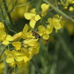Agroécologie : attention aux promesses prématurées ! #1