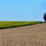Lorsque le Conseil d'État ajoute de l'incertitude dans le secteur des semences