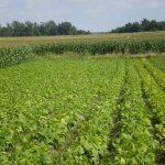 Pesticides : un rapport rassurant sur les produits agricoles passé sous silence