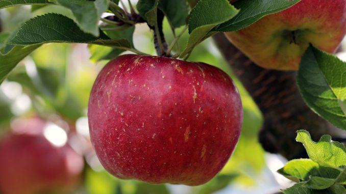 pommes et le monde après